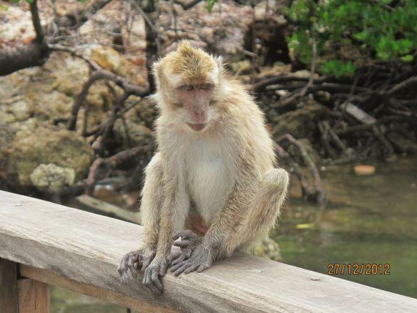 2b Mr Monkey