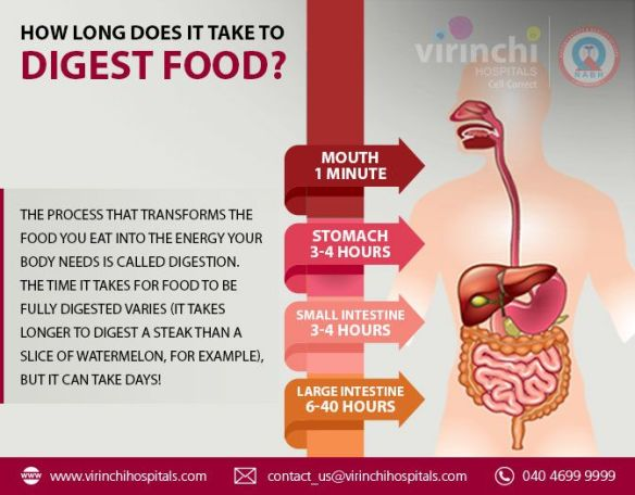 How Long Does It Take To Digest Food?